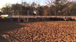 Twitter- Jared Lesh cowhorses