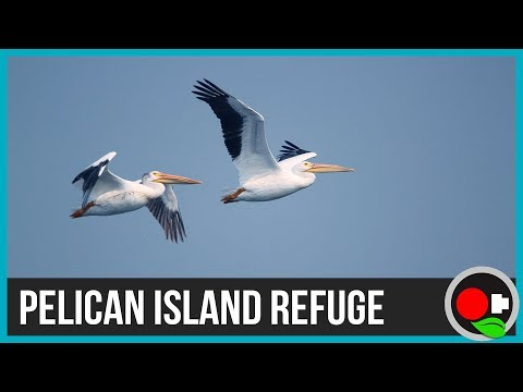 Pelican Island: First National Wildlife Refuge
