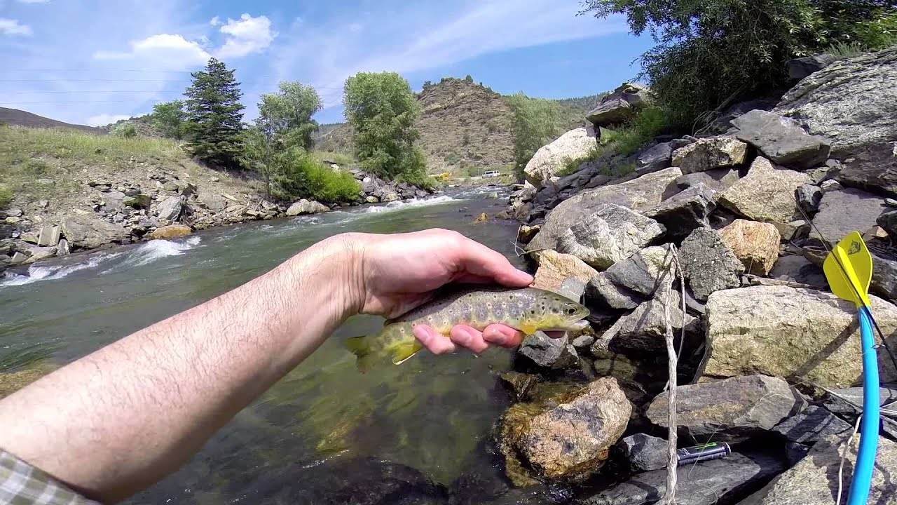 Fly fishing clear creek colorado 2014 fishing alley for Clear creek fishing