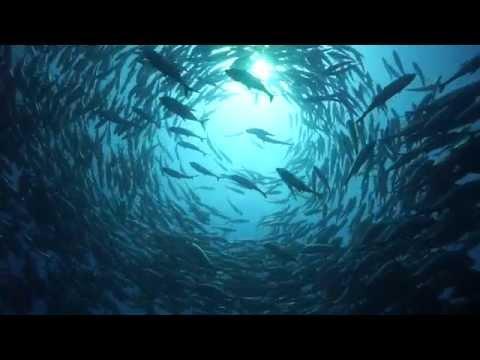 Real World Shark Conservation