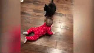 FUNNY CATS AND BABIE PLAYING TOGETHER @4   Funny Babies and Pets lowTrimTrim