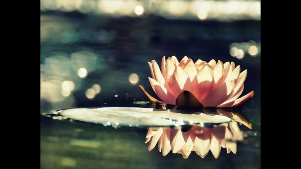 lakme duo des fleurs dessay Lyrics for duo des fleurs (lakmé) by ronan maillard lakmé viens, mallika, les lianes en fleurs jettent déjà leur ombre sur le ruisseau sacré.