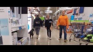 Best Dog Training in Columbus, Ohio! 1.5 Year Old Border Collie Mix, Leo!