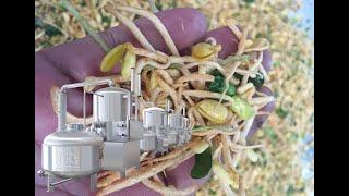 211 vacuum sweet potato chips fryer