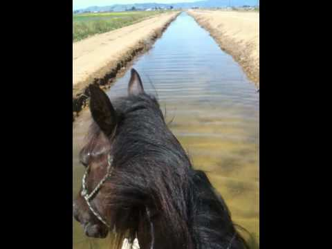 Training and Riding horses in water - Rick Gore Horsemanship - www.thinklikeahorse.org