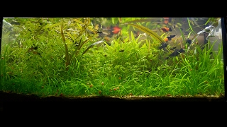 800 days of my 100l Low-tech aquarium. From set up.