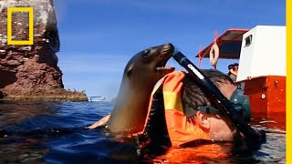 A Playful Sea Lion Encounter in California | National Geographic