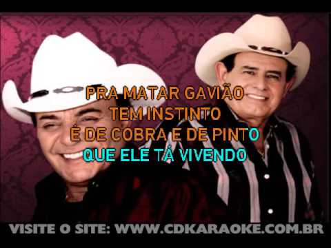 Gino & Geno   O Gavião
