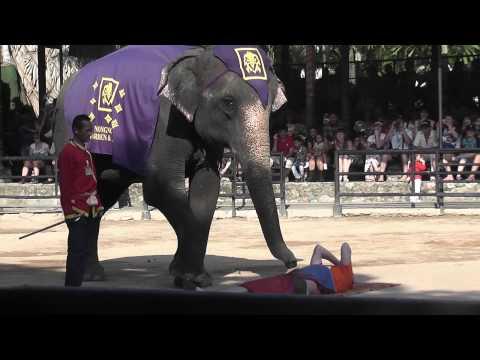 Шоу слонов. Слон делает массаж