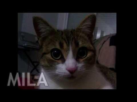 Mila - Una gatita con Suerte -