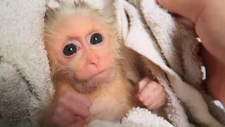 Welcome the new monkey baby - EMILY