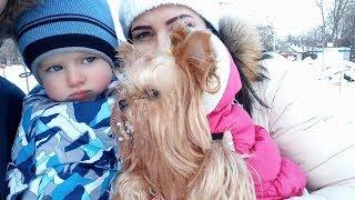 BINGO DOG Song Nursery Rhymes Platon TV | Бинго детская песня для малышей