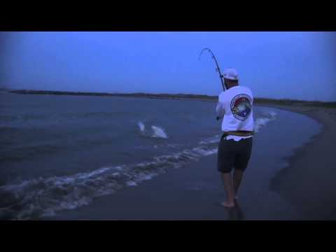 Shark Fishing with Spinfishers