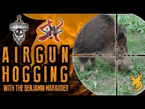 Extreme Airgun Hunting: Hogging with the Benjamin Marauder