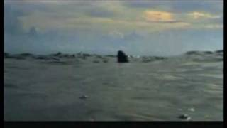 Trailer mar abierto