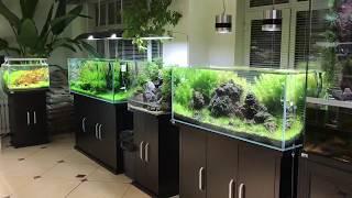 Hồ thủy sinh Đà Nẵng - Thủy sinh Hải - 0934705187 - Một cửa hàng thủy sinh