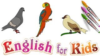 English for kids : How to draw a Dove – Parrot – Sparrows