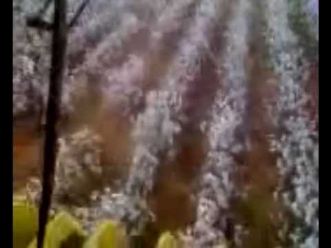 west texas cotton harvest 2009 Video