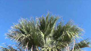 Watch Tilt Palm Tree (in West Oakland) video