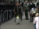 [Penguin given knighthood by King of Norway] Video