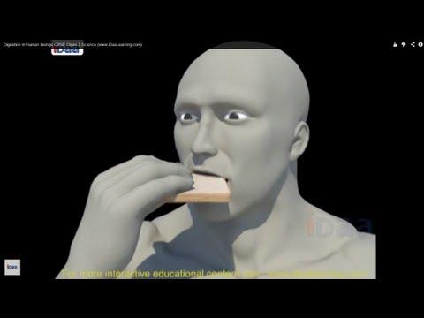 Digestion in Human Beings 3D CBSE Class 7 Science (www.iDaaLearning.com) thumbnail