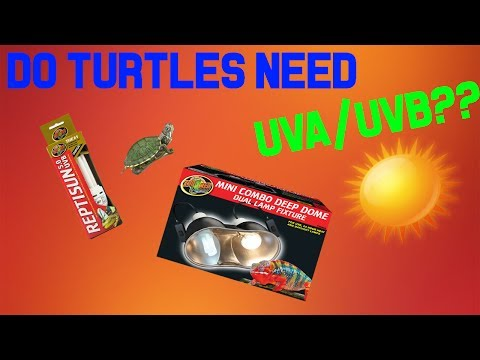 Do turtles really need UVA/UVB? (BASKING)