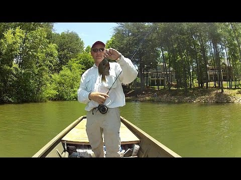 Fly Fishing for Bluegill, Lake Norman - 2013