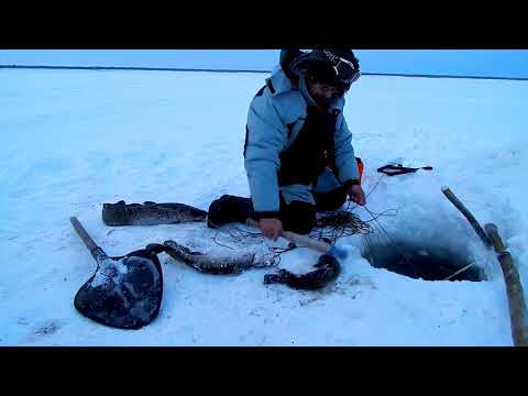 не диалоги о рыбалке налим видео