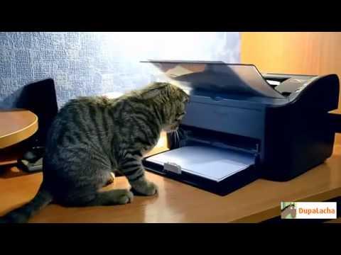 Лучшие Приколы с Кошками  Апрель 2013!!!! - Смешные кошки