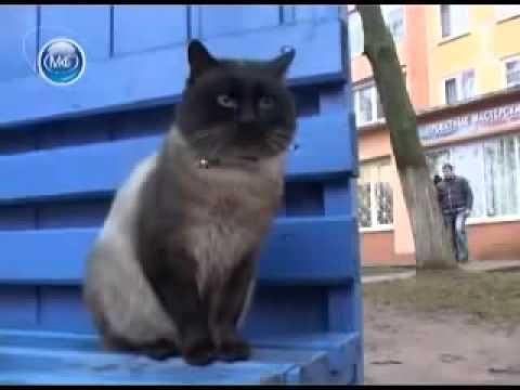 Кот верный как Хатико!!! Плакать хочется!!! Очень грустное видео!! Хозяева поступили очень плохо!!!!