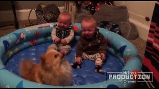 Funny babys and animals masti don't miss video