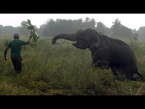 Wildlife officials treat an elephant who has a spinal cord injury !