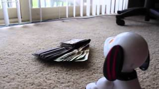 Zoomer Zuppies Review the Interactive Robotic Dog