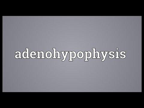 Header of Adenohypophysis