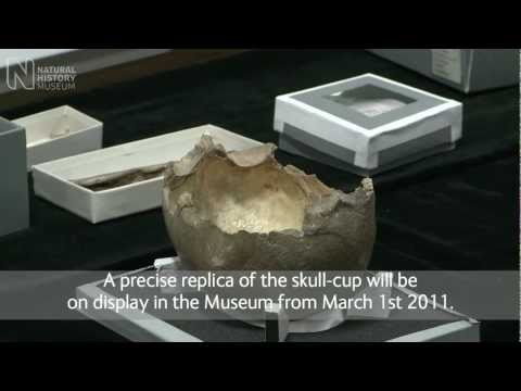 Earliest human skull cups made in the UK | Natural History Museum