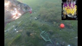 подводная съемка карповой рыбалки