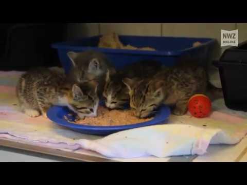 Zahlreiche Tiere suchen ein neues Zuhause