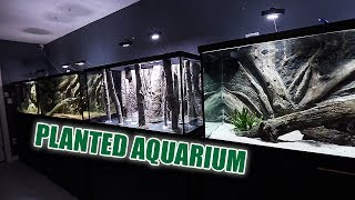 The NEW planted aquarium - 1