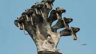 Video clip Những chuyện thần bí về loài rắn 5 đầu trên thế giới, Cực hay