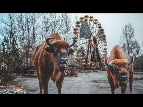 Чернобыльские джунгли. 20 лет без человека. Полная версия.