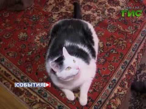 Кот спас женщину от грабителей