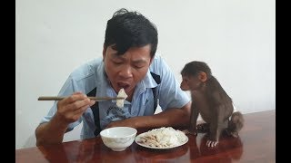 Baby Monkey | Doo Also Wants To Eat His Daddy's Extra Meal