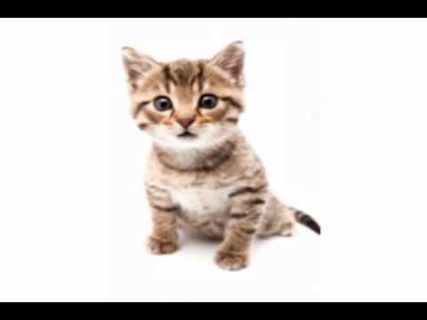 The BP Oil Spill Re-Enacted By Cats in 1 Minute