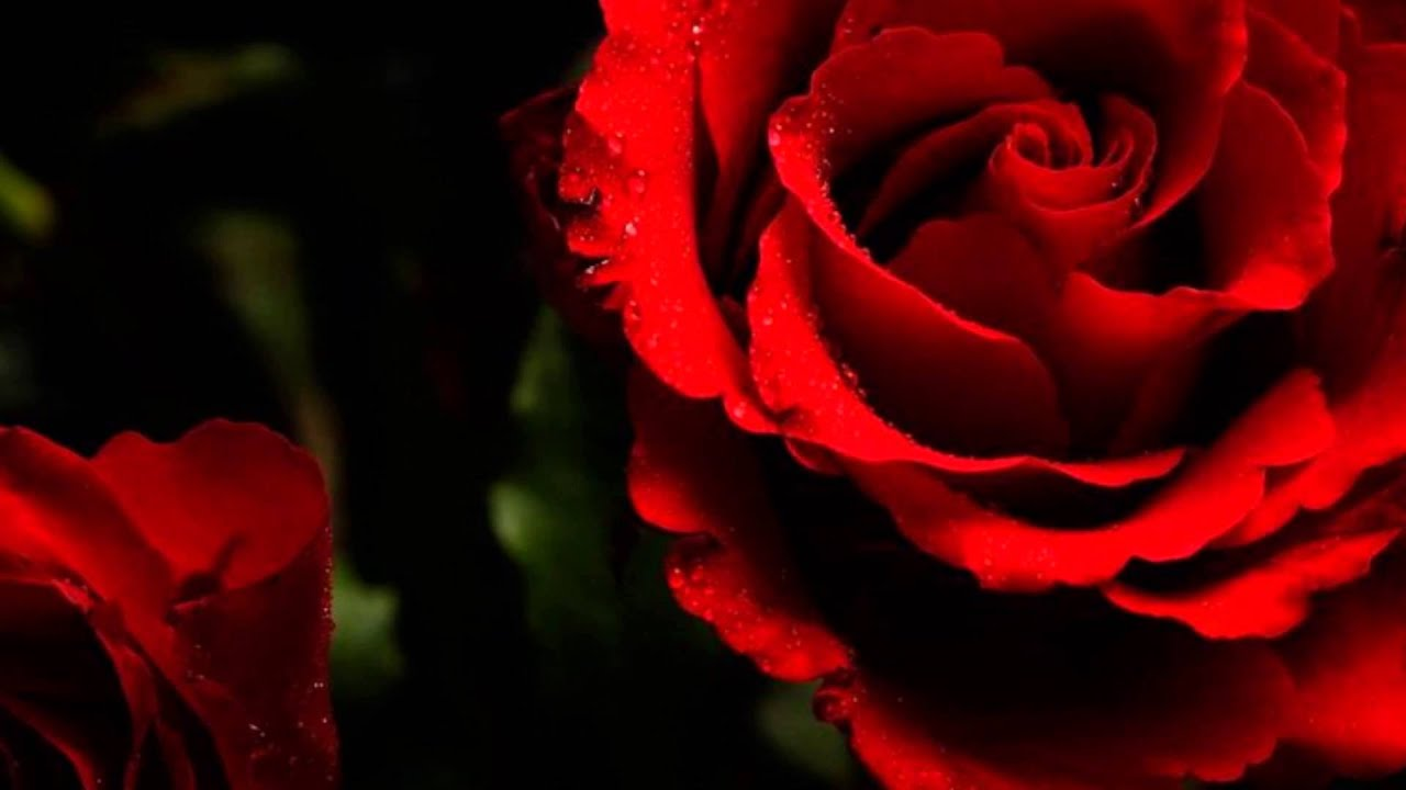 Roses for a blue lady bert kaempfert and his orchestra youtube
