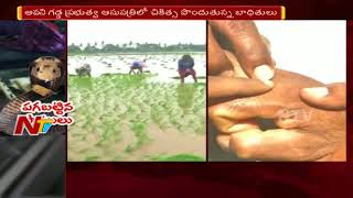 Reason Behind Frequent Snake Bite Incidents In Diviseema Area | NTV