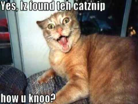 Very Funny Cats 81
