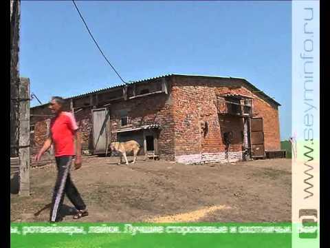 Необычная ферма в Курской области
