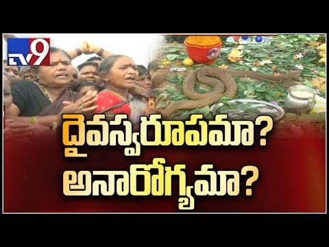 Is Durgada snake seriously ill? || Devotees Vs Animal Lovers - TV9