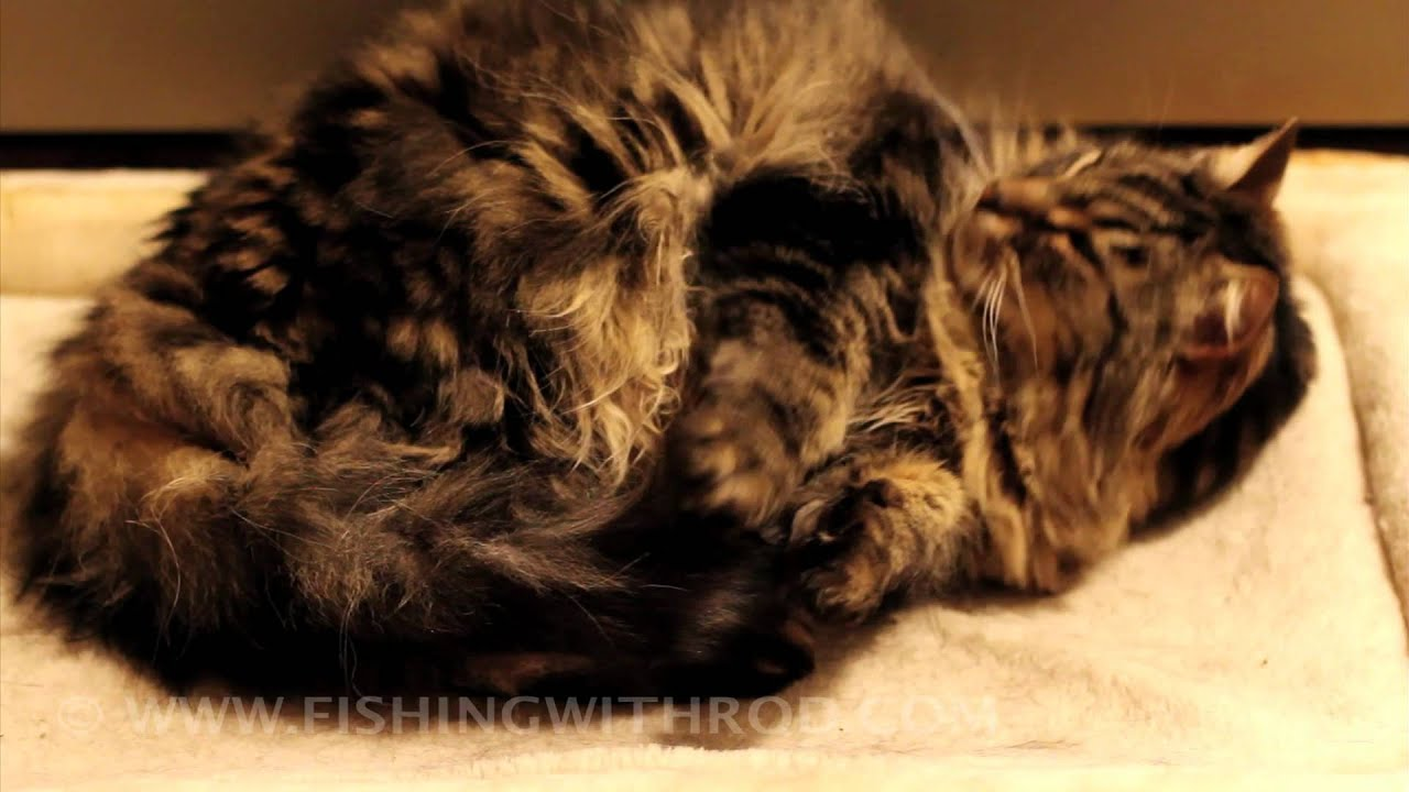 DSLR Video: Cute Furry Cat Just Wants To Sleep
