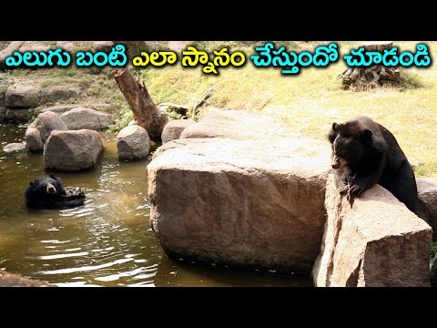 Variety Bear water in Bath See This Video At Zoo Park Hyedrabad || 9RosesMedia #